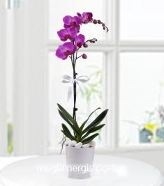 Seramik Vazoda Tek Dallı Mor Orkide