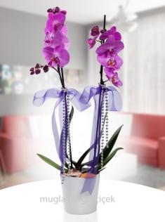 Seramik vazoda çift dallı mor orkide